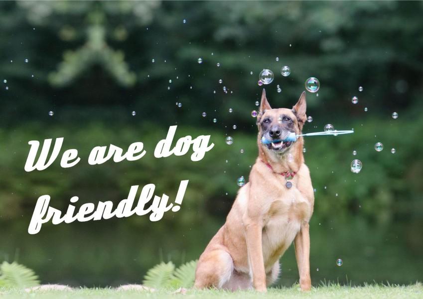 Dog Friendly Holiday Homes Essex Uk