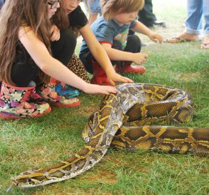 Snakes Alive Family Show