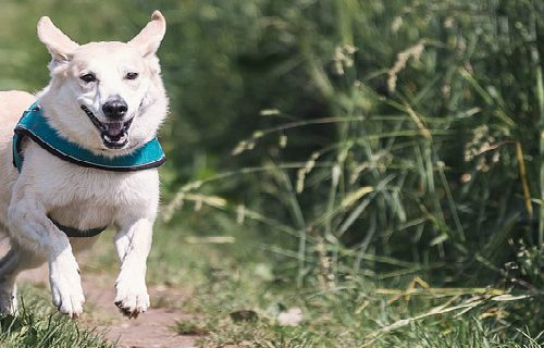Dog Friendly Waldegraves Holiday Park